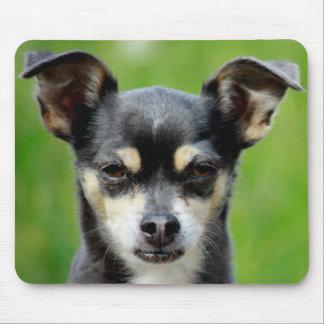 Chihuahua! Mouse Pad