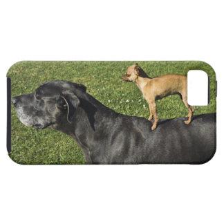 Chihuahua na parte traseira 2 de great dane iPhone SE/5/5s case