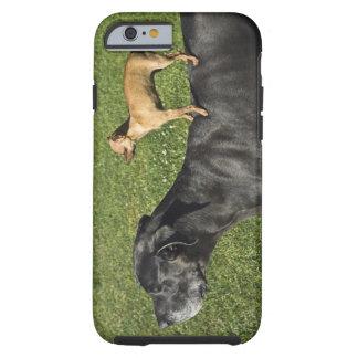Chihuahua na parte traseira 2 de great dane tough iPhone 6 case