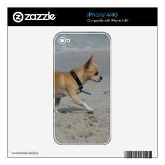 Chihuahua on Beach Skin For iPhone 4