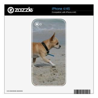Chihuahua on Beach Skin For iPhone 4