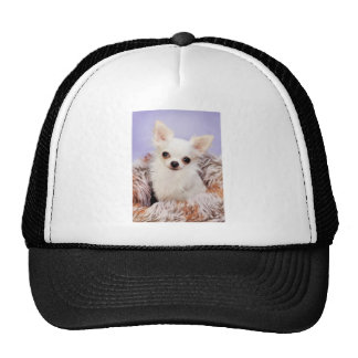 Chihuahua on Blanket Trucker Hat