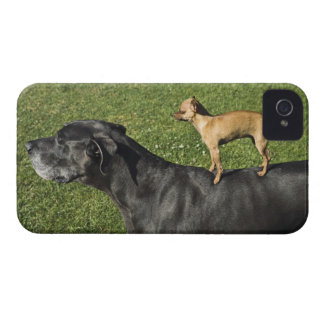 Chihuahua on Great Dane's back 2 Case-Mate iPhone 4 Case