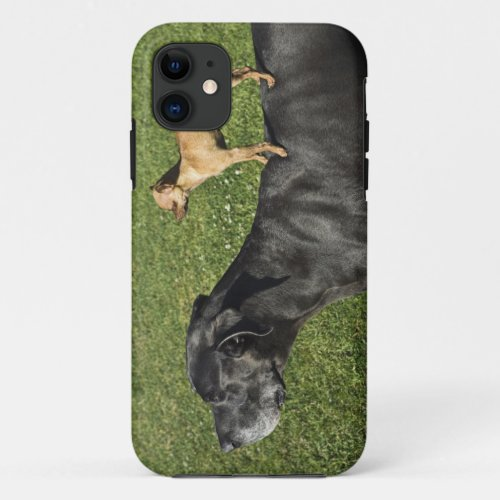 Chihuahua on Great Dane's back 2 Phone Case
