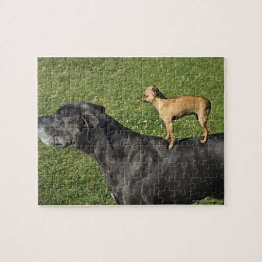 on great dane s back 2 puzzle zazzle great dane chihuahua mix ...