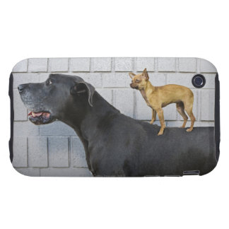 Chihuahua on Great Dane's back iPhone 3 Tough Covers