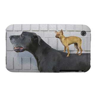 Chihuahua on Great Dane's back iPhone 3 Case