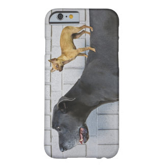 Chihuahua on Great Dane's back Barely There iPhone 6 Case