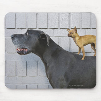 Chihuahua on Great Dane's back Mouse Pad