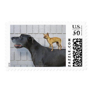Chihuahua on Great Dane's back Postage