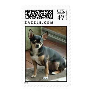 Chihuahua Photo Postage Stamp