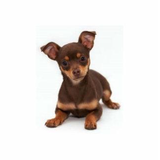 Chihuahua Photo Sculpture