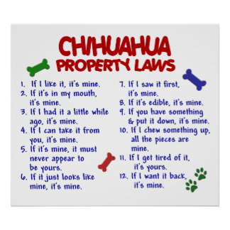 CHIHUAHUA PL2 POSTER