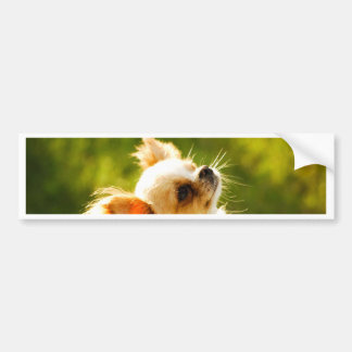 Chihuahua Portrait Bumper Sticker