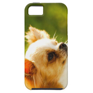 Chihuahua Portrait Case For iPhone 5/5S