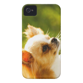 Chihuahua Portrait Case-Mate iPhone 4 Cases