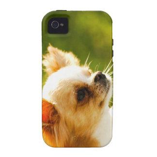 Chihuahua Portrait Case-Mate iPhone 4 Cover
