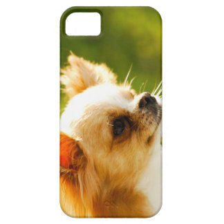 Chihuahua Portrait iPhone 5 Cover