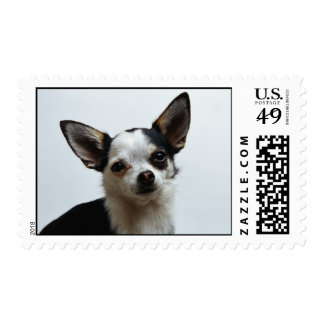 Chihuahua Postage Stamps