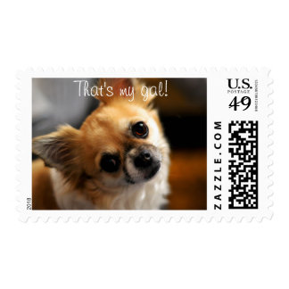 Chihuahua Postage Stamps That's My Gal