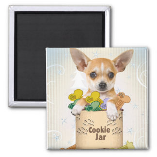 Chihuahua presentada con el tarro de galletas imán de frigorifico