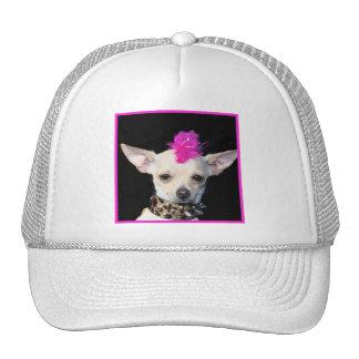 Chihuahua Punk Hat
