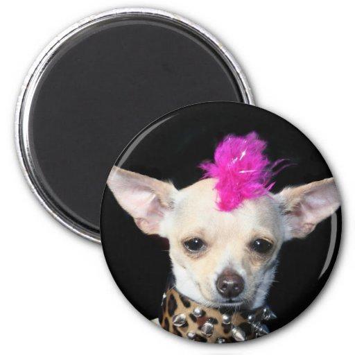 Chihuahua Punk Magnet