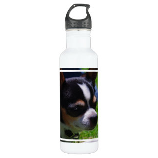 Chihuahua Pup 24oz Water Bottle