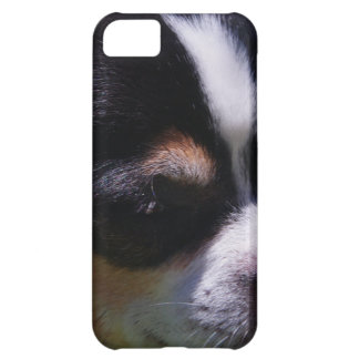 Chihuahua Pup Cover For iPhone 5C