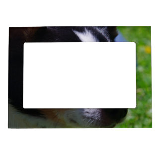 Chihuahua Pup Magnetic Frame