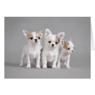 Chihuahua puppies card