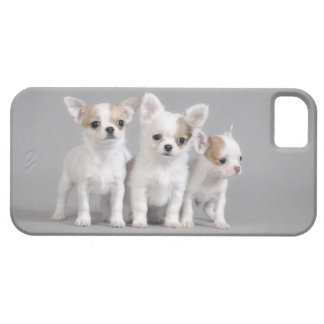 Chihuahua puppies iPhone SE/5/5s case
