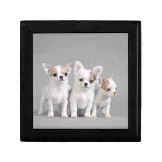 Chihuahua puppies keepsake box