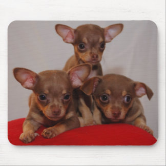 Chihuahua puppies mouse pad