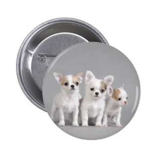 Chihuahua puppies pinback button