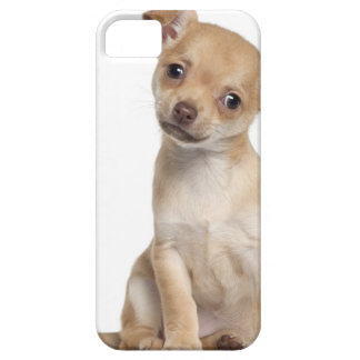 Chihuahua puppy (2 months old) iPhone SE/5/5s case