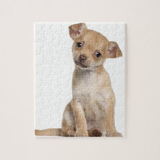 Chihuahua puppy (2 months old) jigsaw puzzle