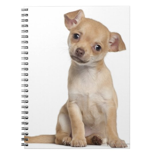 Chihuahua puppy (2 months old) notebook