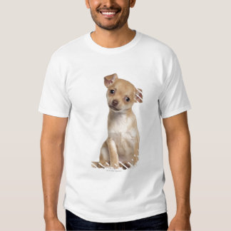 Chihuahua puppy (2 months old) t shirt