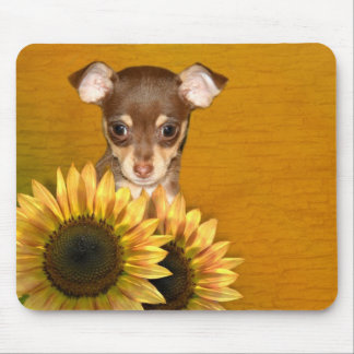 Chihuahua puppy and sunflowers mouse pad