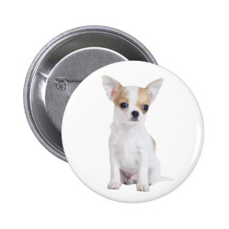 Chihuahua puppy button