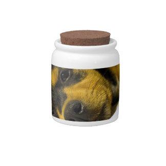 Chihuahua Puppy Candy Jar