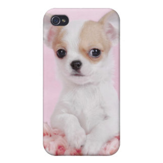 Chihuahua puppy cover for iPhone 4