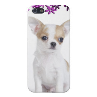 Chihuahua puppy cover for iPhone SE/5/5s
