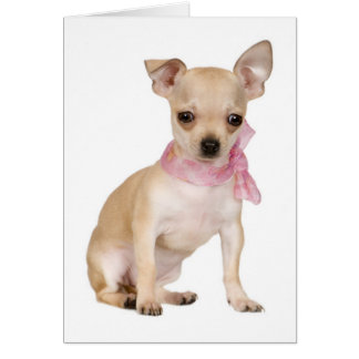 Chihuahua Puppy Dog Blank Note or Greeting Card