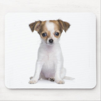 Chihuahua Puppy Dog Mouse Pad