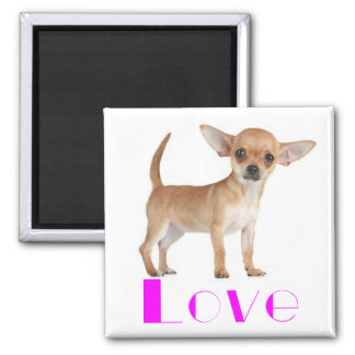Chihuahua Puppy Dog - Pink Love Big Ears Magnet