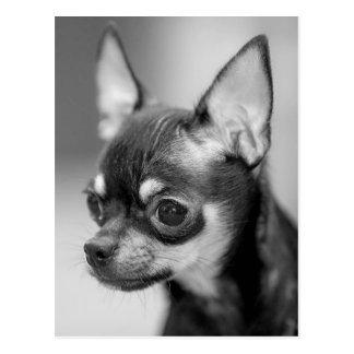 Chihuahua Puppy Dog Post Card