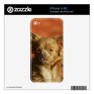 Chihuahua Puppy Headshot iPhone 4 Decal