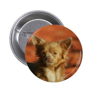 Chihuahua Puppy Headshot Pinback Button